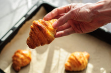 Hand Holding Fresh Baked Croissant With Oven-tray On Background