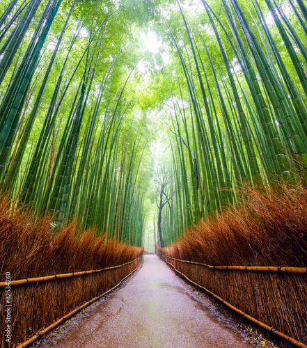 Poster Bamboo Path to bamboo forest, Arashiyama, Kyoto, Japan.