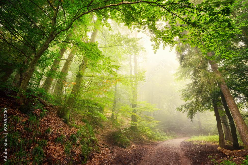 Fototapety, obrazy: Natürlicher Torbogen aus Bäumen