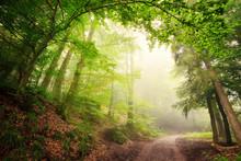 Natürlicher Torbogen Aus Bäumen