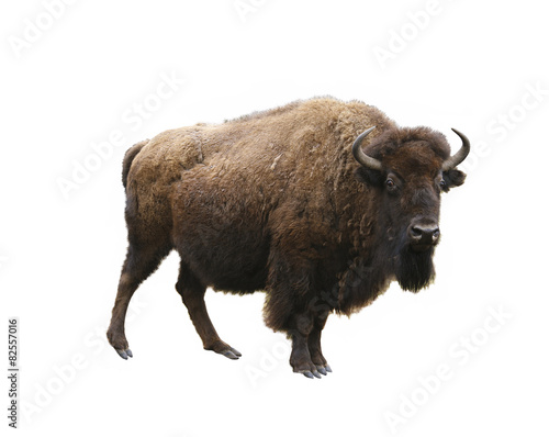 Spoed Foto op Canvas Bison european bison isolated on white background