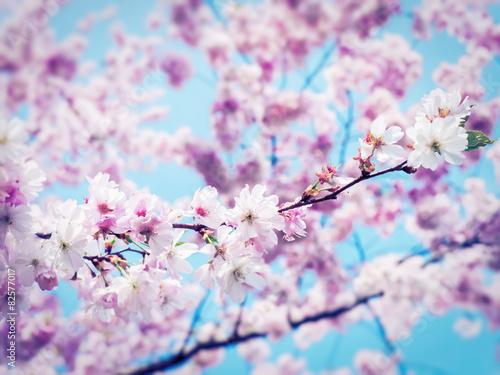 obraz dibond wiosna