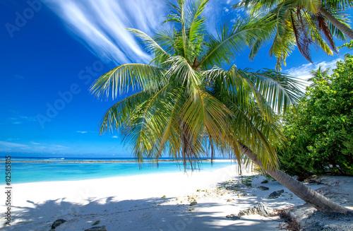 Einsamer Strand mit Palmen Fototapet
