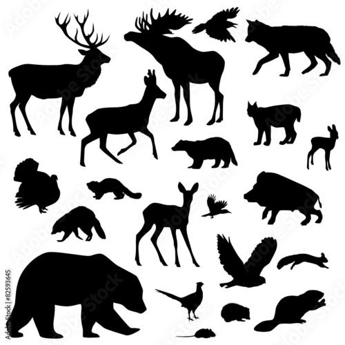 zwierzeta-lesne