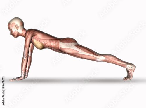 3D medical figure with muscle map in yoga position - Buy this ... on yoga energy, yoga international, yoga back, yoga stretches, yoga adrenal glands, yoga leg workout, yoga history, yoga skin, yoga peace, yoga anatomy, yoga strength, yoga mind, yoga bones,
