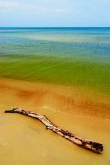 Fototapeta Morze Driftwood on the beach. Baltic sea coast, Pomerania, Poland.