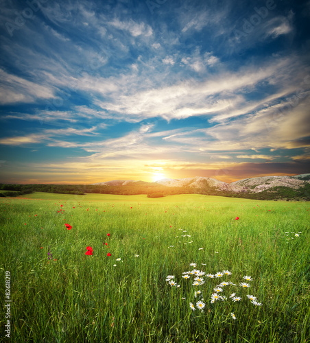 Poster Heuvel Green spring meadow.