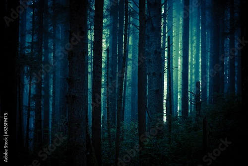 Wall Murals Forest Dark Creepy Forest