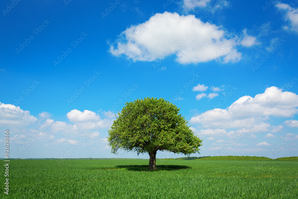 Single tree in a green field with blue sky and white clouds