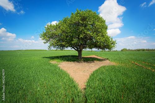 pojedynczy-drzewo-w-zielonym-polu-z-niebieskim-niebem-i-bialymi-chmurami