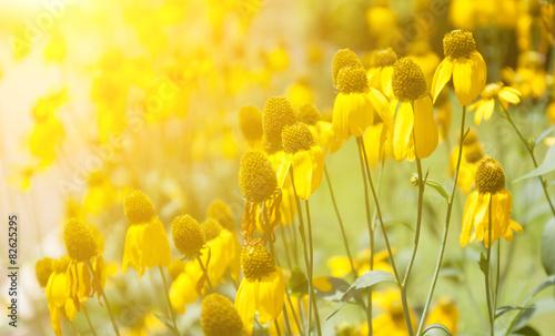 Kwiaty z porannym światłem
