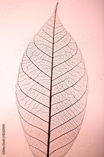 Poster Squelette décoratif de lame Skeleton leaf on pink background, close up