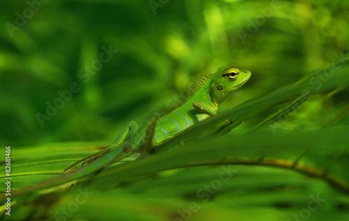 Stickers pour porte Cameleon Little green chameleon on a palm leaf