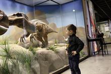 Boy Looks At A Dinosaur