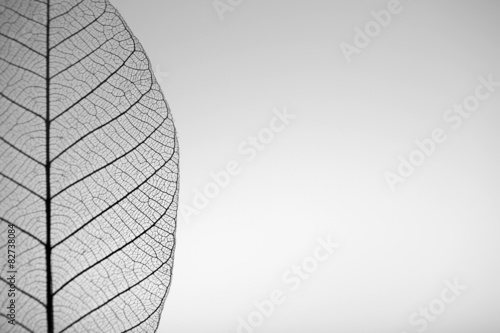 Poster Decorative skeleton leaves Skeleton leaf on grey background, close up