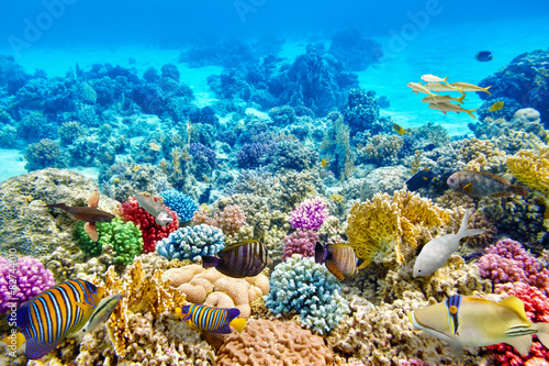 Poster Coral reefs Underwater world with corals and tropical fish.