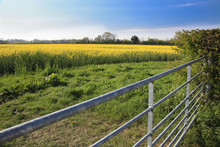 Rapeseed Field And Farm Gate