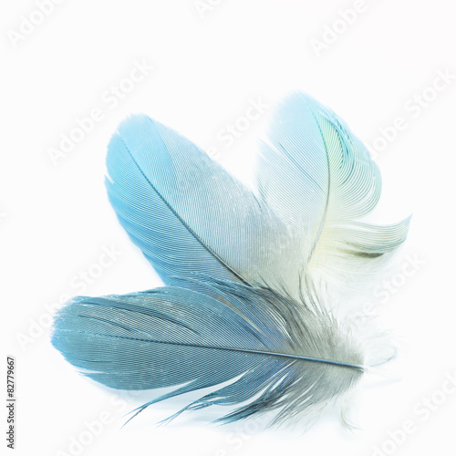 piór ptaków na białym tle