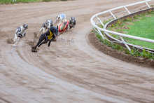 Greyhound Dogs Racing
