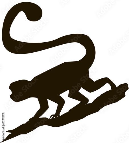 Valokuva  Monkey silhouette