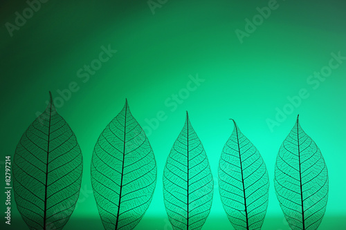 Poster Squelette décoratif de lame Skeleton leaves on green background, close up