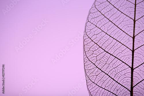 Photo sur Toile Les Textures Skeleton leaf on purple background, close up