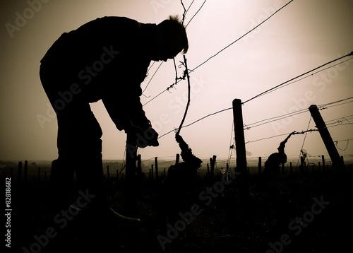 Fotografía  Dans les vignes