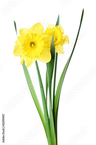 Deurstickers Narcis Narcissus flower isolated on white