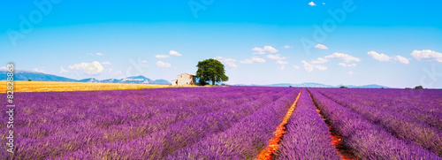 Papiers peints Lavande Lavender flowers blooming field, house and tree. Provence, Franc
