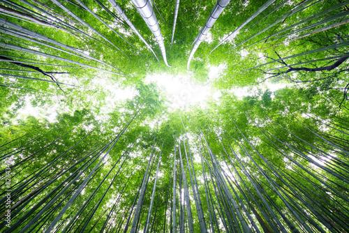 Poster de jardin Bambou Bamboo forest on bright sky, Arashiyama, Kyoto, Japan.