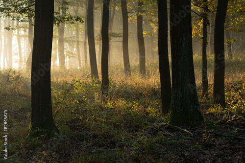 Fototapeten Wald Beautiful morning scene in the forest with sun rays