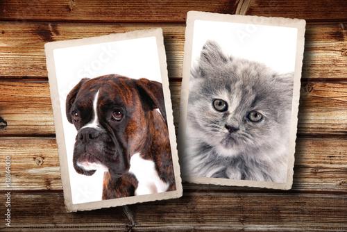Fotografia fotografie vintage di cane e gatto