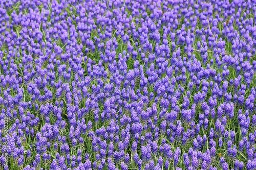 Juliste  ilkbahar