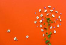 Creative Tree Made From White Flowers On Orange Background.Yarro