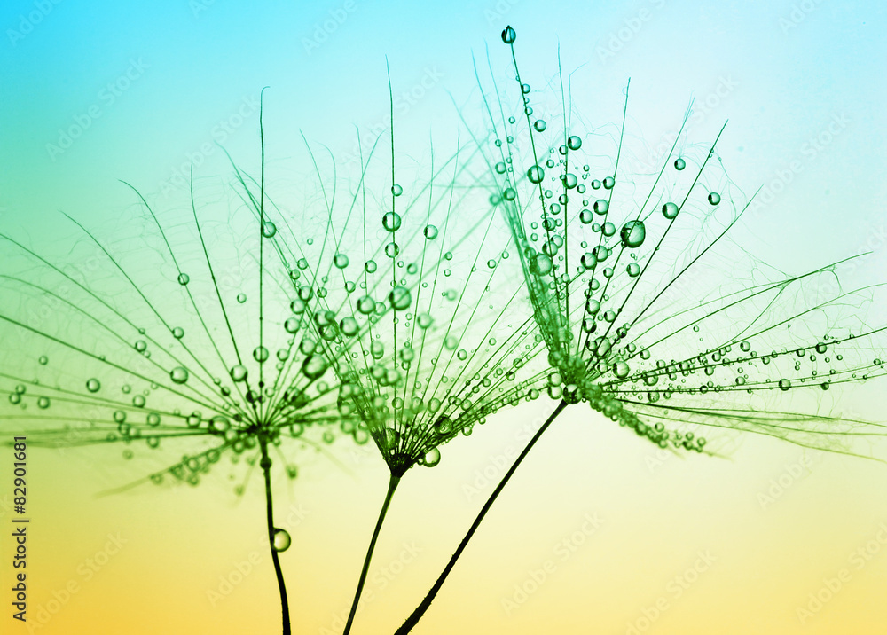 Fototapeta Dandelion seed