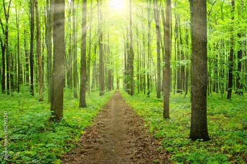 las słoneczny