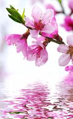Fototapeta Do sypialni pink blossoms