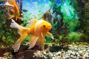 Kolorowe ryby w akwarium