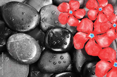 Obraz w ramie Flowers and stones