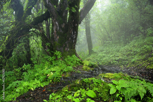 Photo  Selva de Nepal