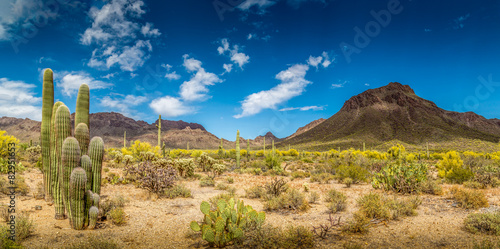 Arizona Desert Ladscape