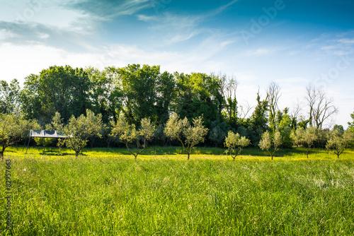 Papiers peints Jardin Campi ulivi prati, Paesaggio di campagna Toscana, agricoltura