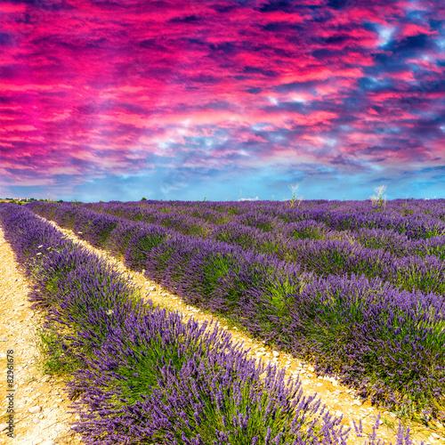 lawendowy-kwiat-kwitnacy-pachnace-pola-w-niekonczacych-sie-rzedach-valenso