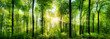 canvas print picture - Wald Panorama mit Sonnenstrahlen