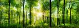 Fototapeta Nature - Wald Panorama mit Sonnenstrahlen