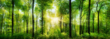 Fototapeta Panels - Wald Panorama mit Sonnenstrahlen