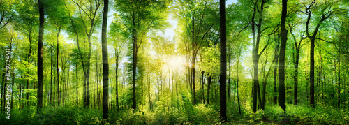 Printed kitchen splashbacks Forest Wald Panorama mit Sonnenstrahlen