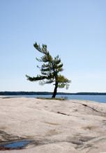 View Of Wind Swept Tree In Georgian Bay, Ontario, Canada
