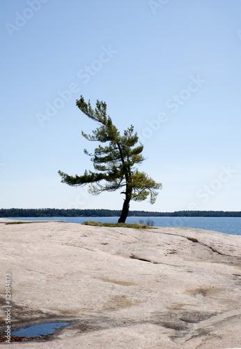 Foto  View of wind swept tree in Georgian Bay, Ontario, Canada