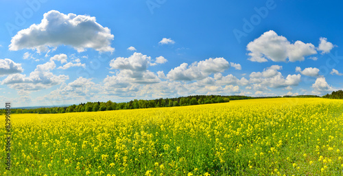 Foto auf Gartenposter Landschappen Flower field in spring countryside